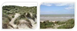 Digiprint Duin en Zee